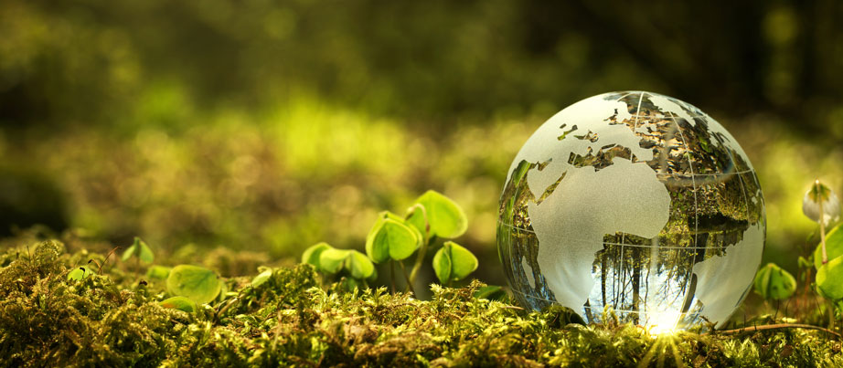 Nachhaltigkeitskonzept: Nahaufnahme von einem Globus aus Glas im Wald