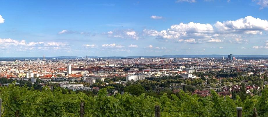 Blick auf Wien von einem Weinberg aus
