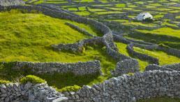 Grüne Hügellandschaft in Irland